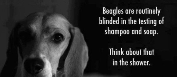 beagle-spotlight-880x385-1377785349-602x263
