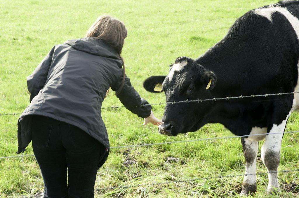 pro-cows-2