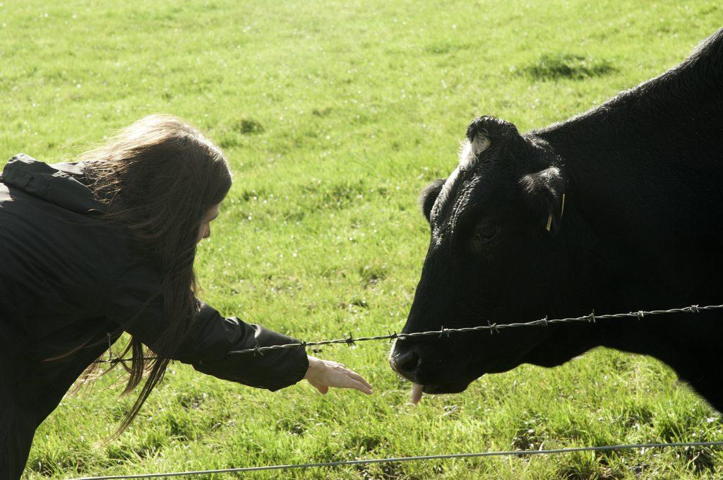 pro-cows-4